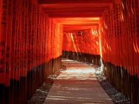 Fushimi Inari torii gates Kyoto 2010 Micah Gampel