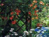 My Garden magazine 2004 Venetia Kajiyama garden Micah Gampel
