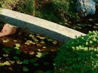 Tofukuji temple garden Kyoto 2009 Micah Gampel
